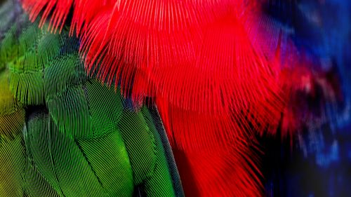 Colorful bird feathers HD Wallpaper