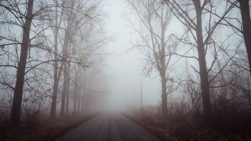 Dawn over a foggy road HD Wallpaper