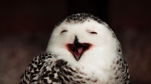 Funny owl HD Wallpaper