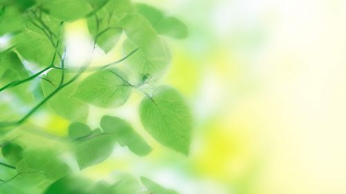 Green nature leaves HD Wallpaper