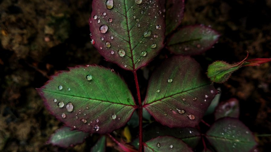 Macro image of rain drops on a leaf HD Wallpaper