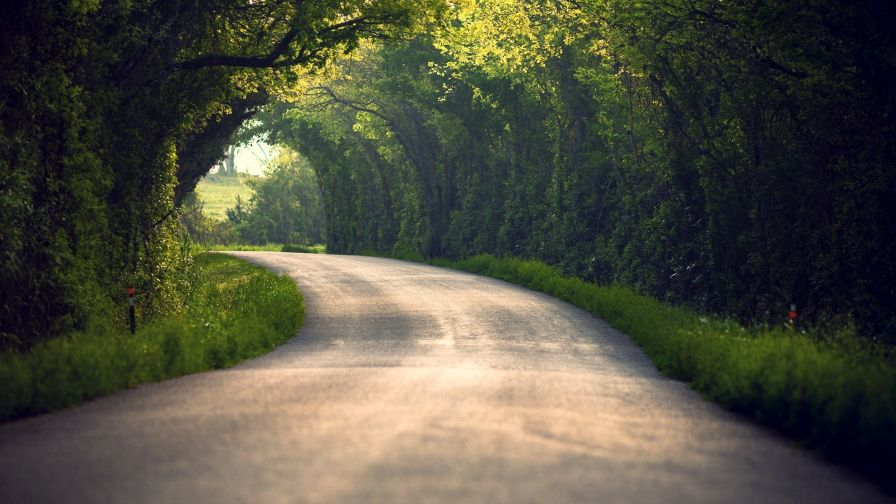 Road full of trees HD Wallpaper