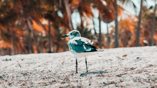 Seagull standing at the sand HD Wallpaper