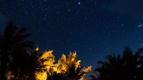Tropical trees under a starry sky HD Wallpaper
