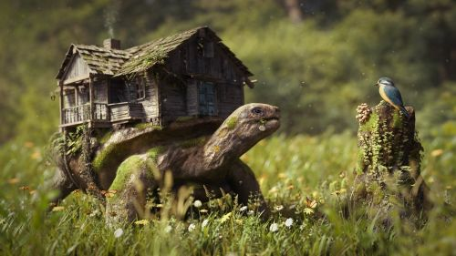 Turtle house HD Wallpaper