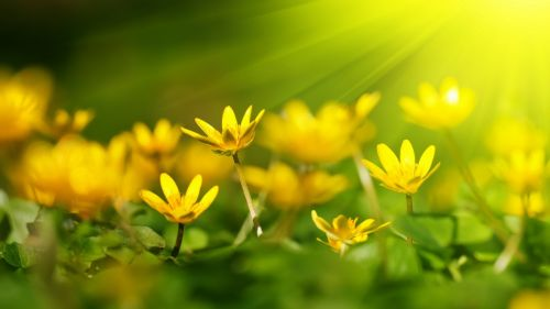 Yellow flowers at sunlight HD Wallpaper